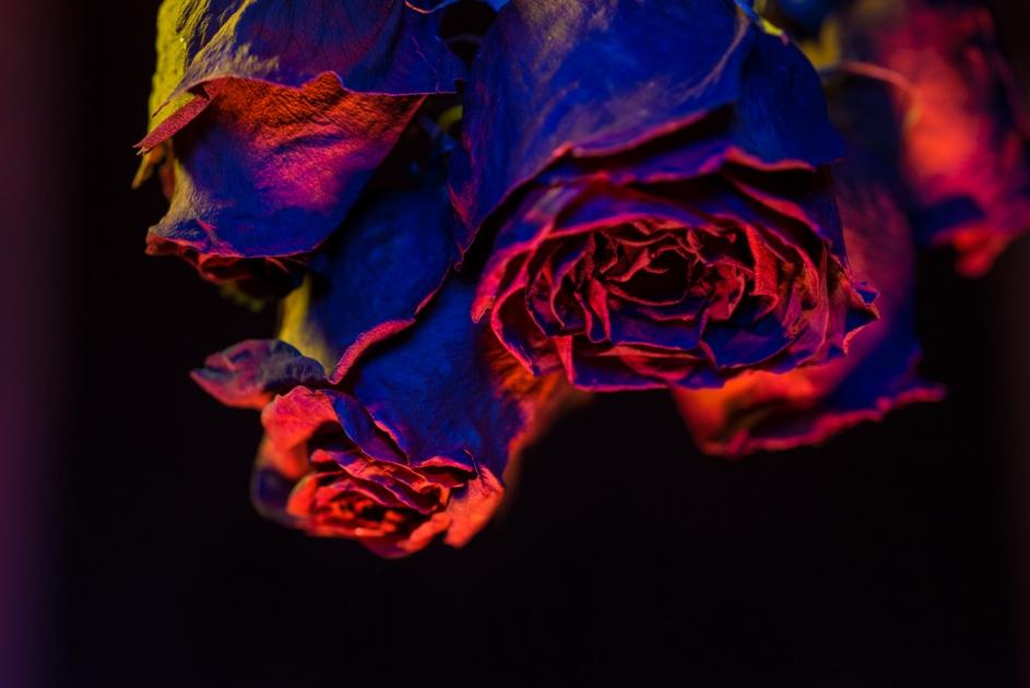 http://mathewsmith.com/files/gimgs/th-40_Mathew_Smith_Flowers.jpg